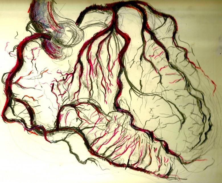 anatomy 1 - heart (1)