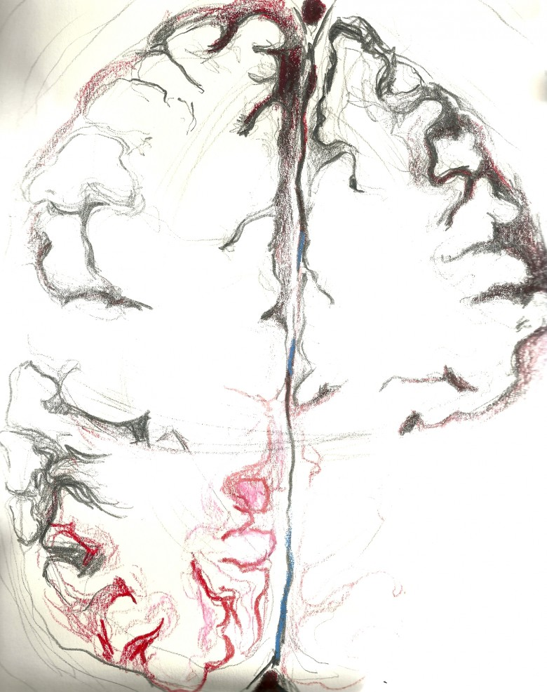 anatomy - brain 2