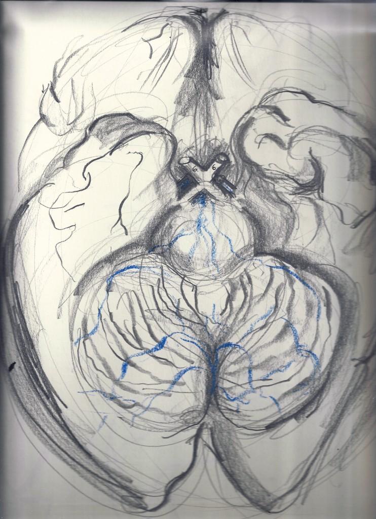 anatomy - brain 3_optic nerve (1)