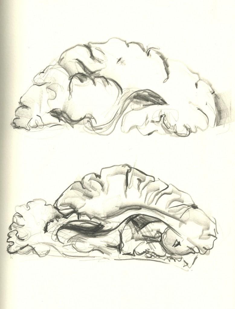 b1 brain