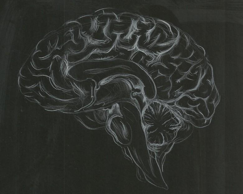 brain 6